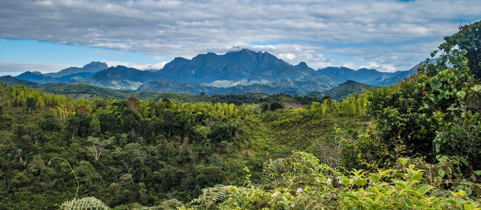 Explore the dense jungle and mountaintop cloud forests of Madagascar's Marojejy National Park in search of endangered lemurs.
