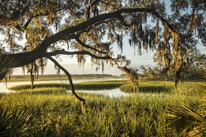 Into the Heart of the Lowcountry