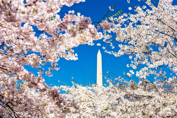 The National Park Service says peak bloom will happen in early April in Washington, D.C.