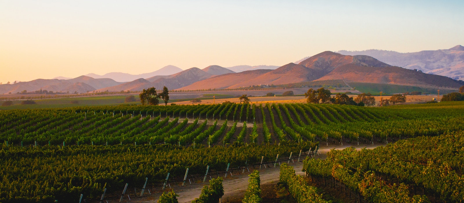 In the heart of Santa Barbara's wine country, the Santa Ynez Valley boasts picturesque grapevines at the base of rolling hills.