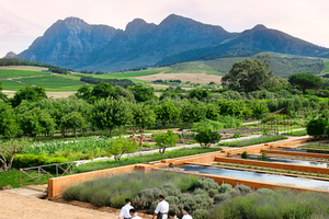 How to Weekend in Cape Town's Wine Country