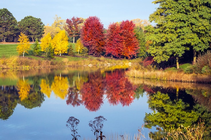 Fall foliage at the Chicago Botanic Gardens