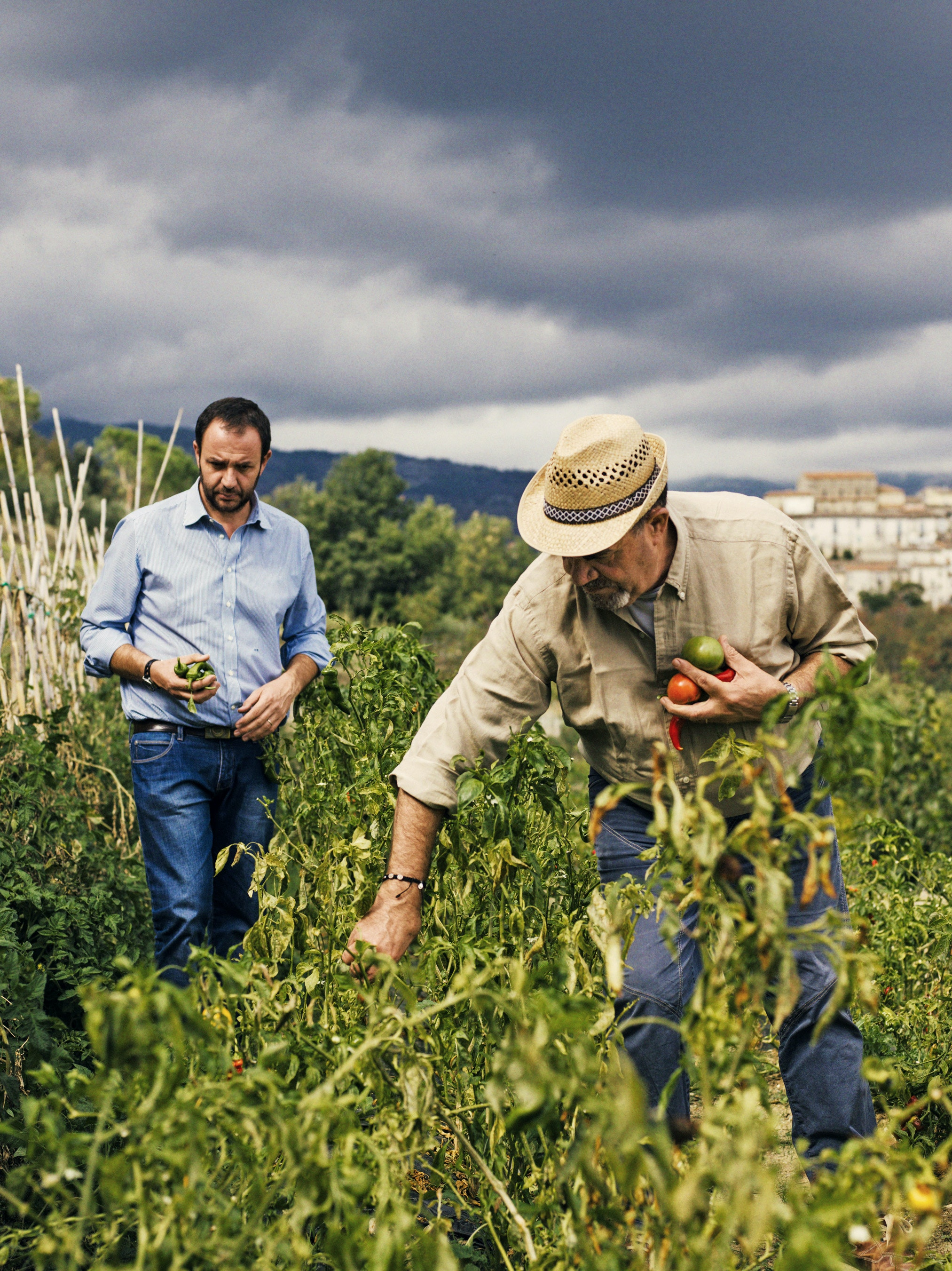 Hotelier Enzo Barbieri and his son Michele pick tomatoes.