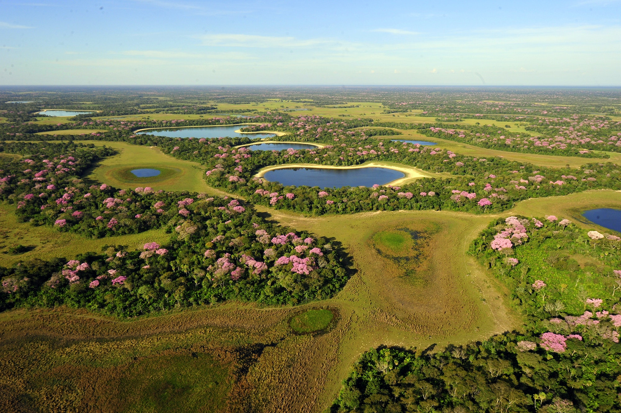 The Pantanal is home to 10 million caiman, 650 bird species, 400 kinds of fish, and more than 100 mammal species.