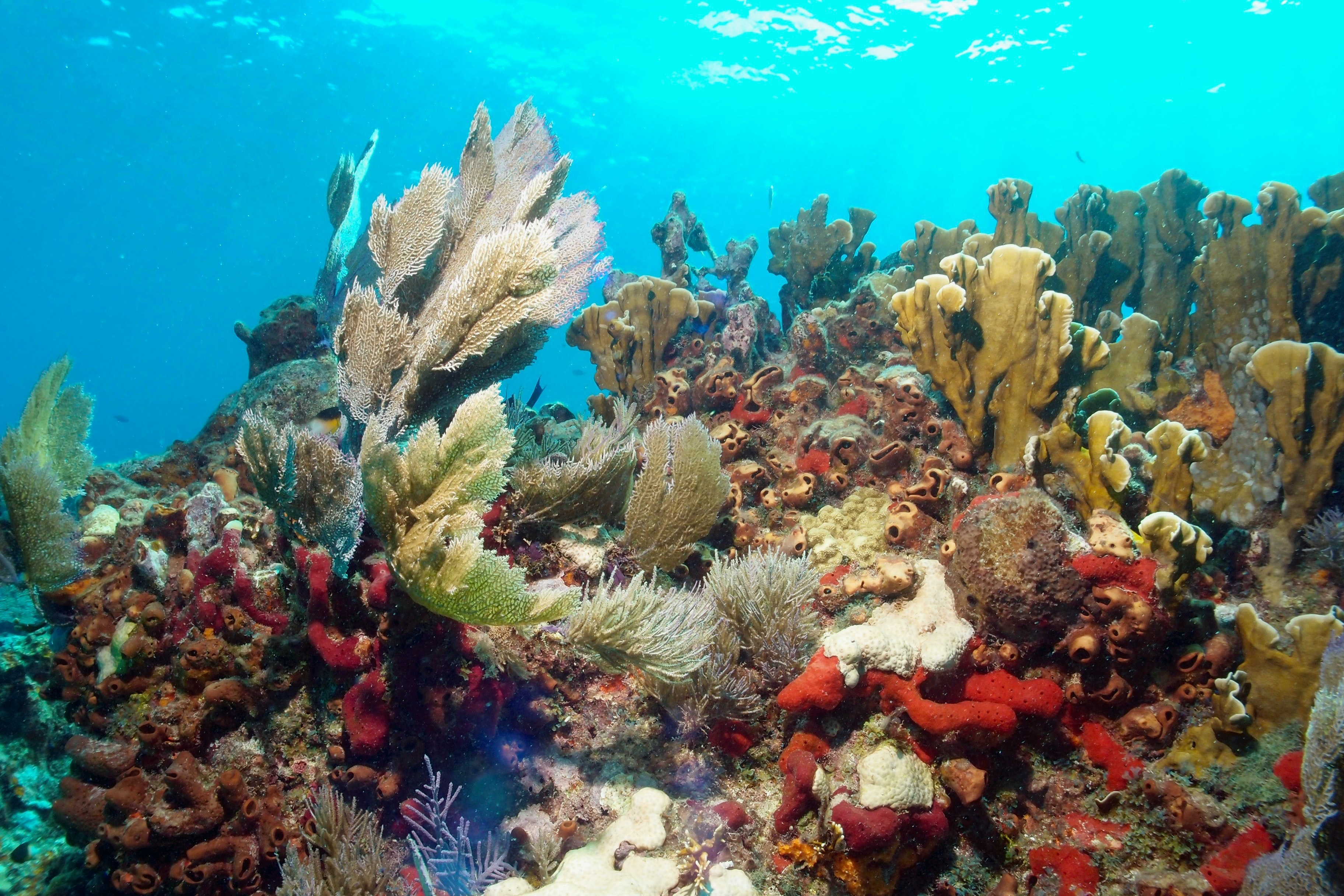 The pale and white-edged corals here are in the process of bleaching, or dying. The difference between those and the vibrant, thriving corals is clear at a glance.
