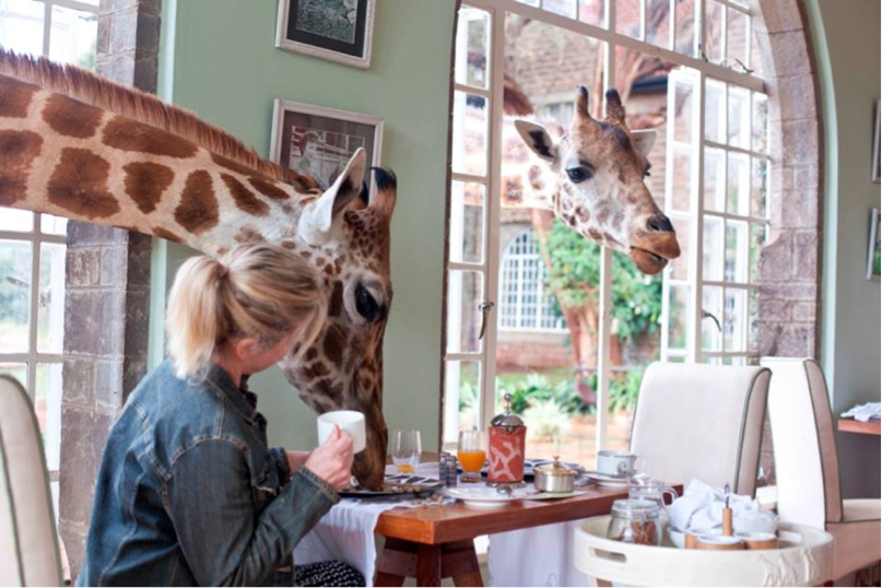 Special breakfast guests at Giraffe Manor