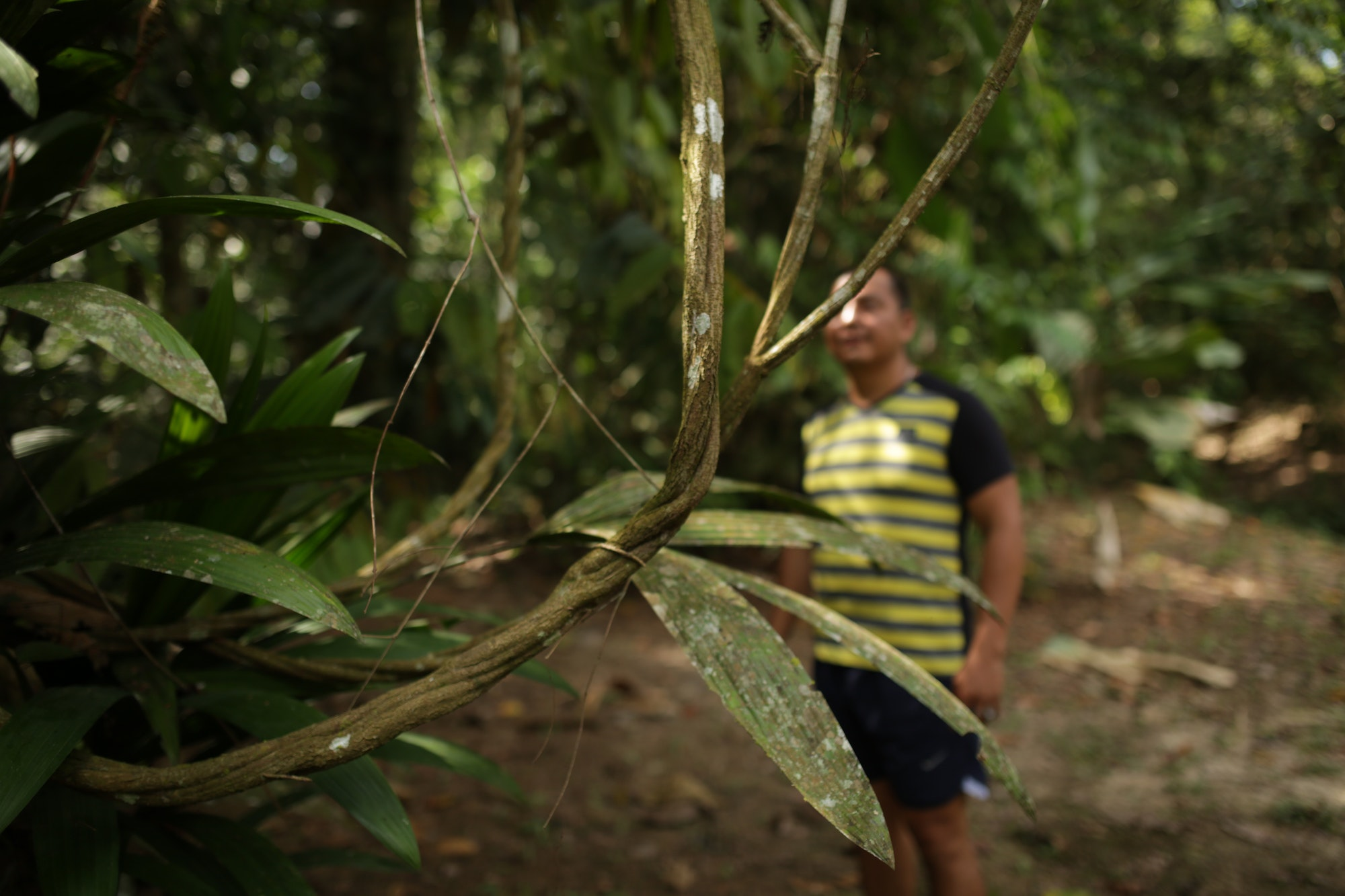 Shaman Percy stands behind an ayahuasca vine outside Iquitos, Peru.