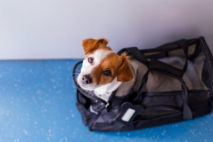 Starting this month, young puppies will no longer be allowed on Delta flights.
