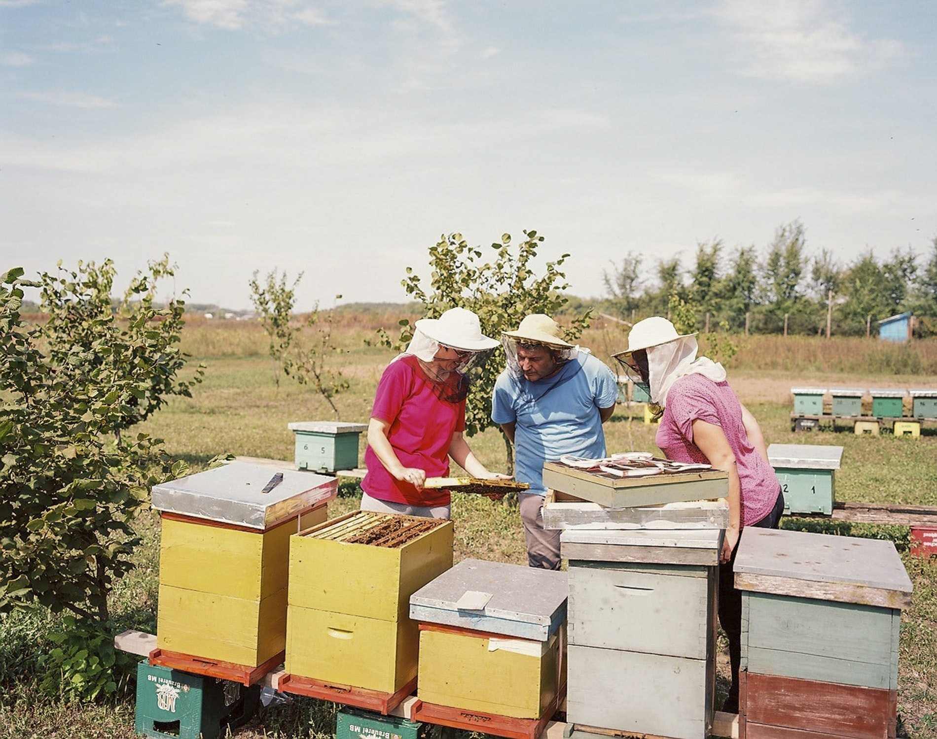 Beekeepers at work along the Peace Trail