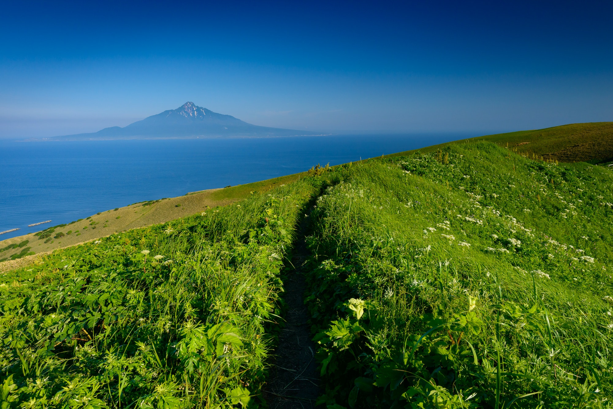 On Rebun Island, native wildflowers are in bloom from June to August.