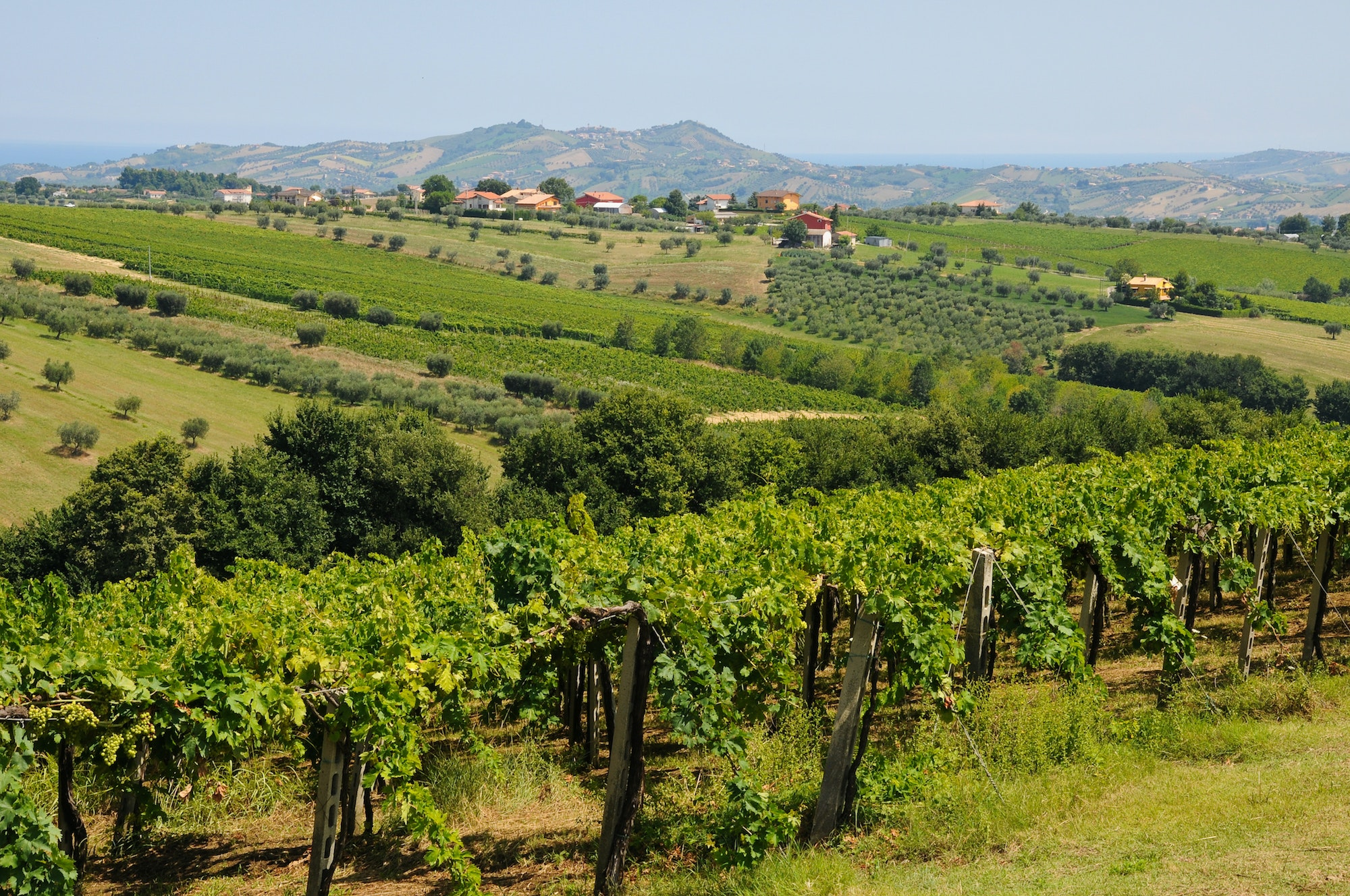 Abruzzo is an Italian wine region located in the country's mountainous central area near the Adriatic Sea.