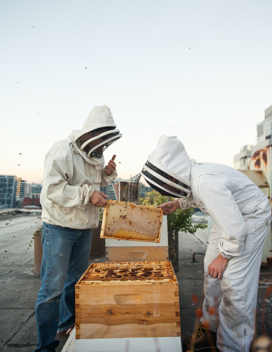 Bee Local's Damian Magista, left, and Ryan LeBrun examine the sticky yield from their hardworking bees on a rooftop in Portland.