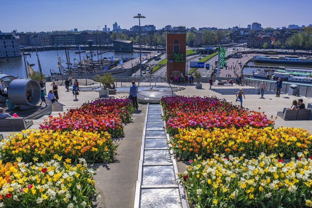 Throughout April, travelers can see Holland's famous blooms for free at more than 85 public spaces in Amsterdam.