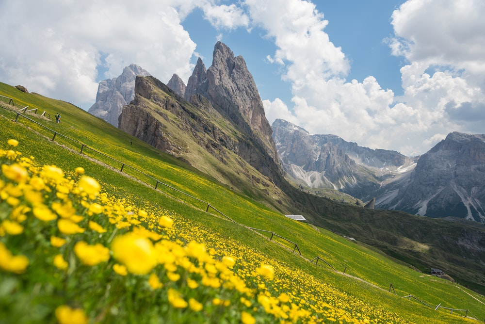 Rock climb or hike in the Dolomites, home to plenty of pretty blooms.