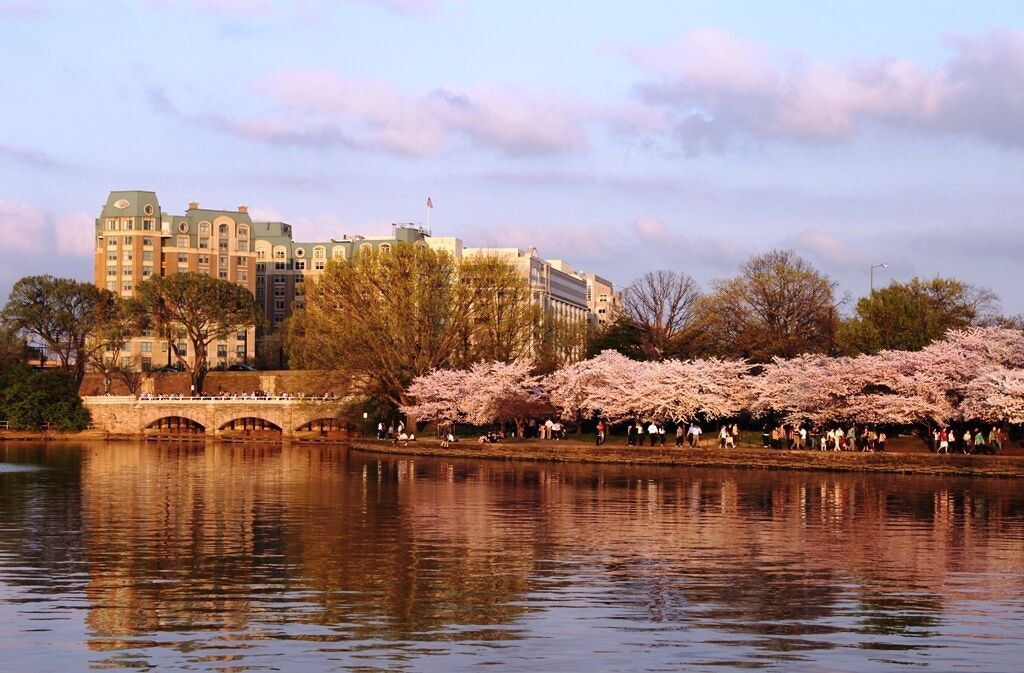The Mandarin Oriental, which overlooks the Tidal Basin and all these glorious cherry blossoms