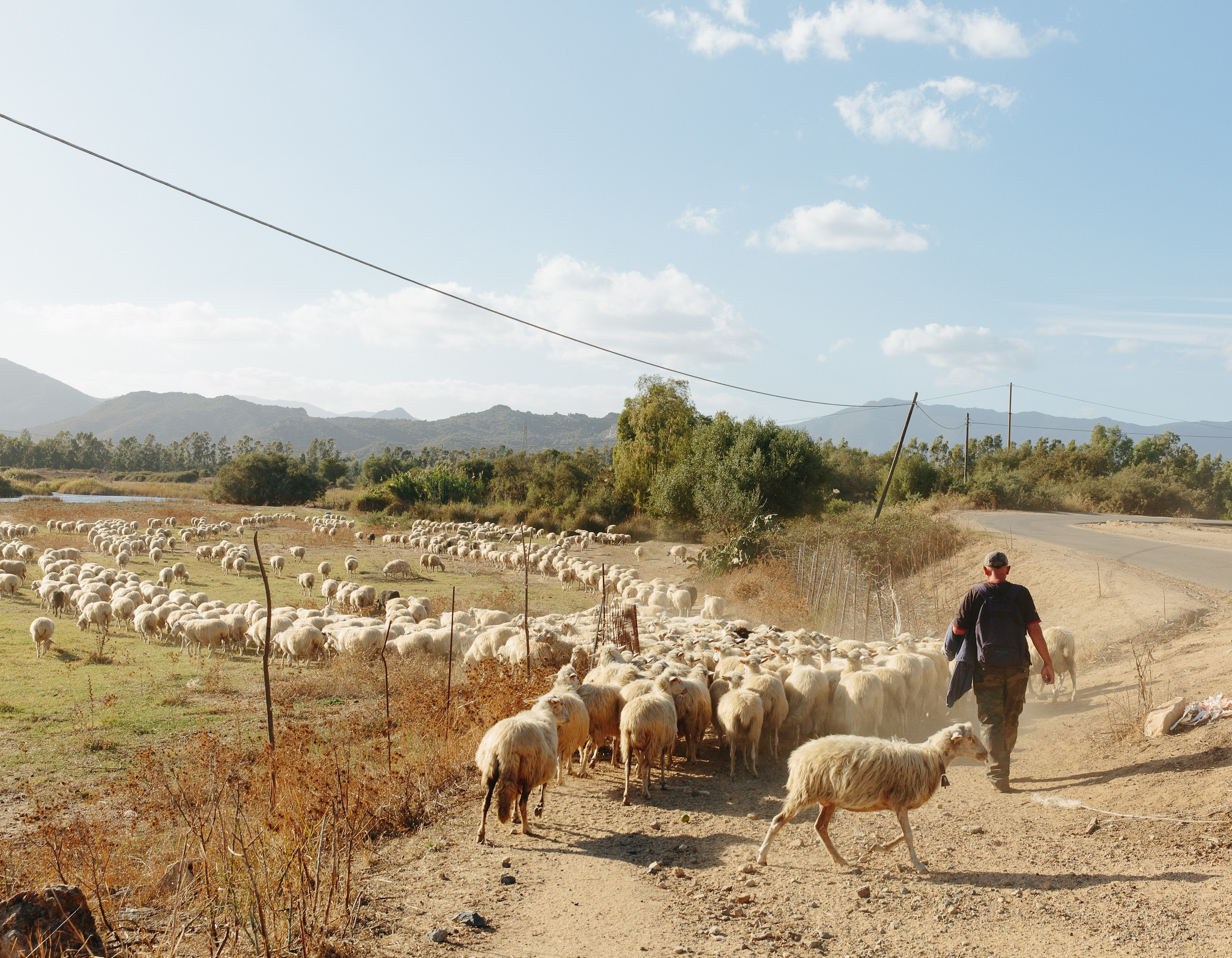 A herder corrals sheep in the rural areas of southwest Sardinia.