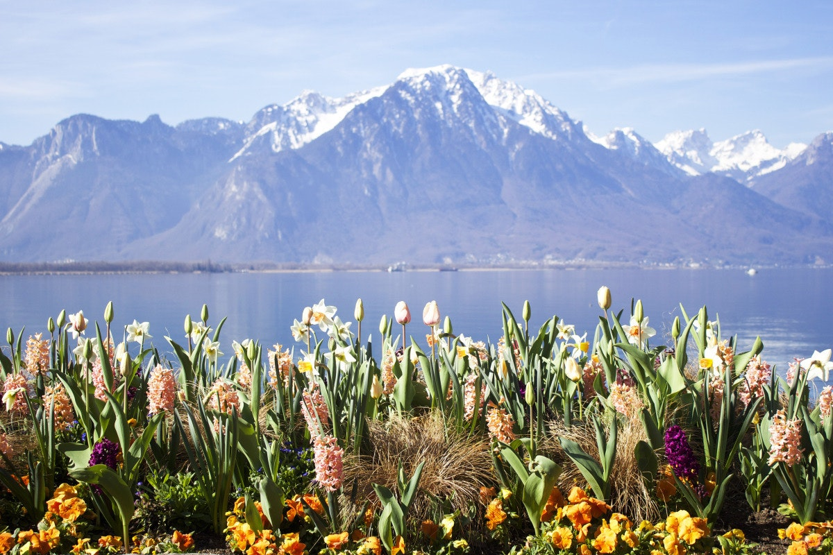 Wildflowers bloom in Montreaux, a municipality located next to Lake Geneva.