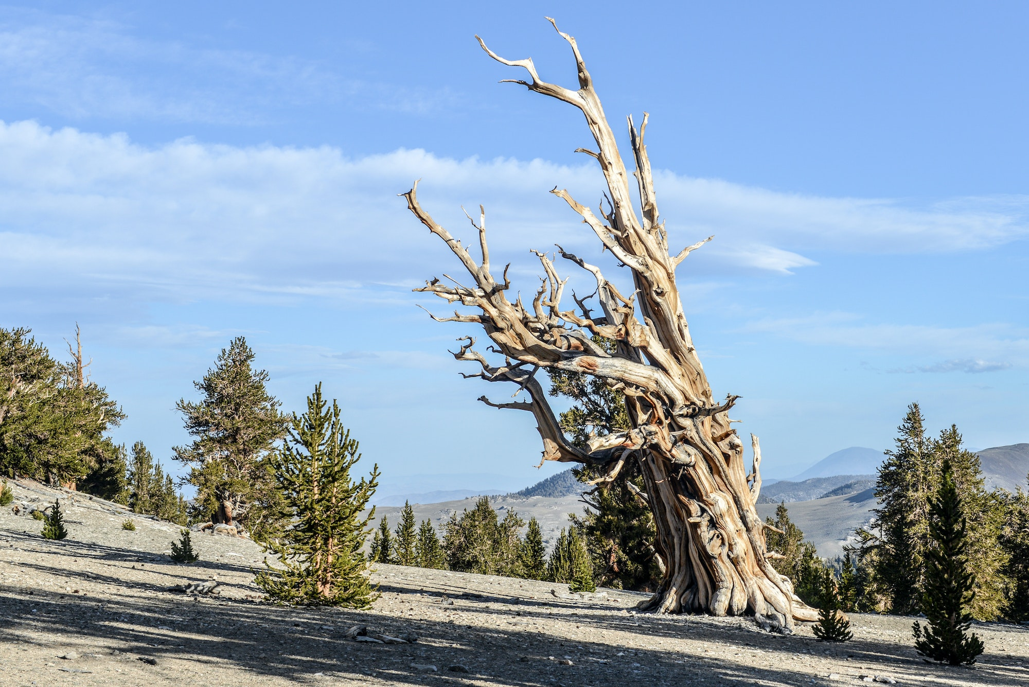 Ancient Bristlecone Pine Forest protected area in Inyo County, California