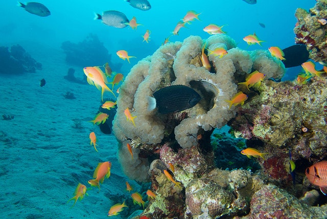 The Japanese Garden in Eliat is filled with colorful corals and fish