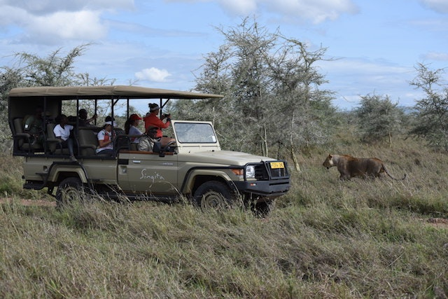 Serengeti Girls Run participants hopped back in their vehicle when predators were spotted too close to their course