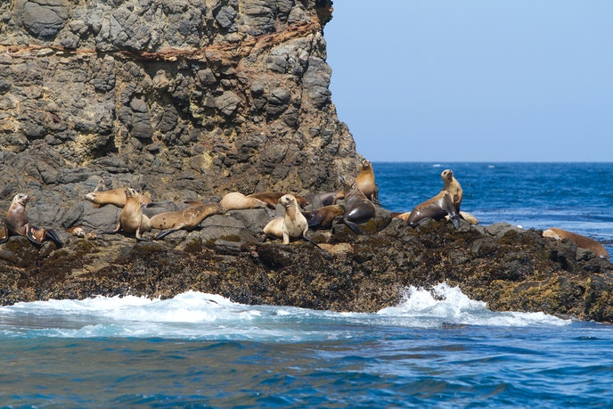 California sea lions, in addition to 2,000 other species of animal, live on the Channel Islands.