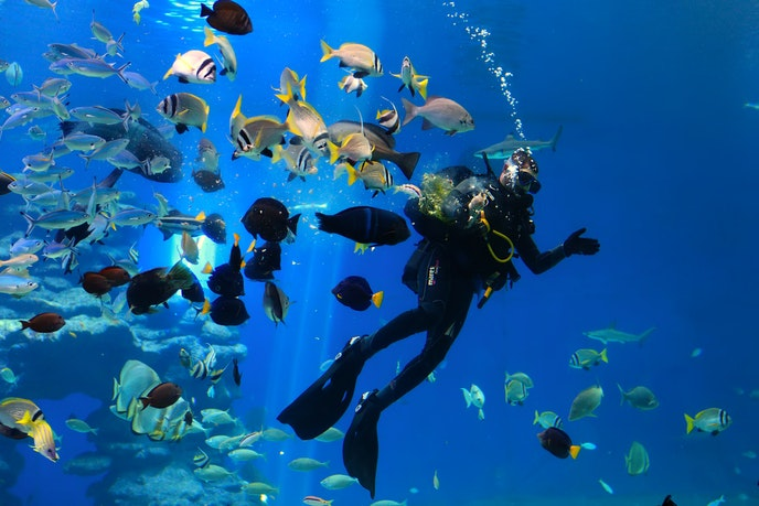 A diver feeds fish in the shark pool at Eilat's Coral World Underwater Observatory Marine Park.
