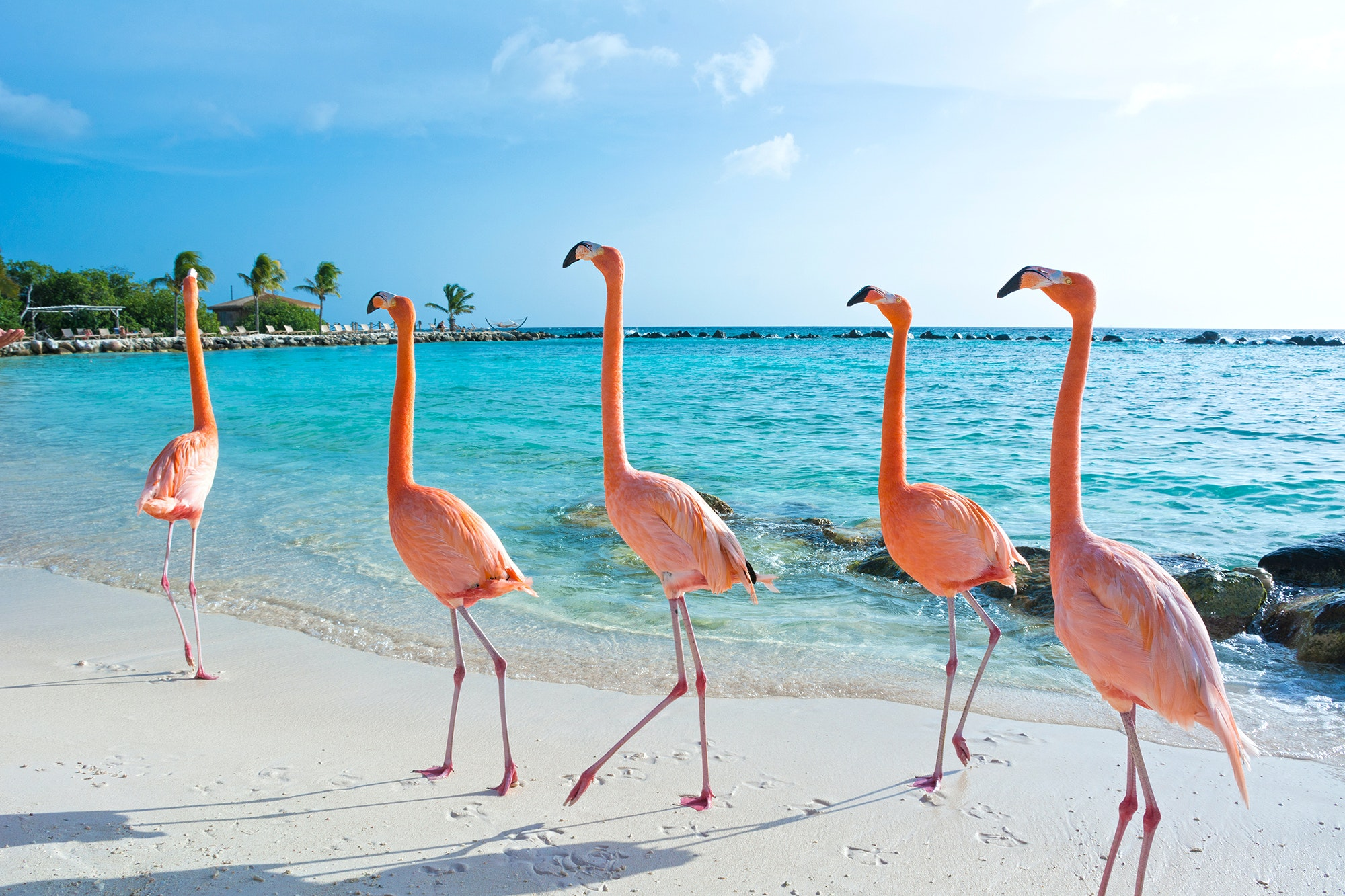 If you live in the Midwest or South, getting to Aruba—and its famous pink flamingos—will be much easier this winter.