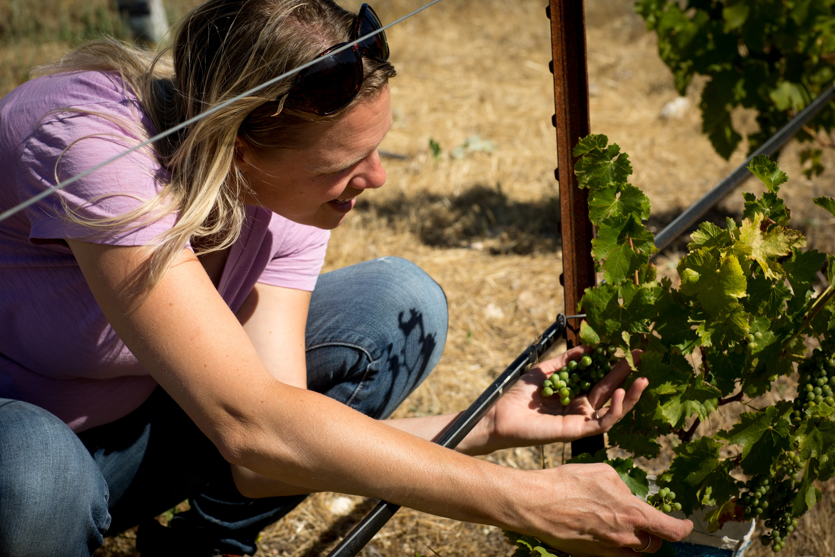 Giornata stands out for growing a wide range of native Italian grape varieties.