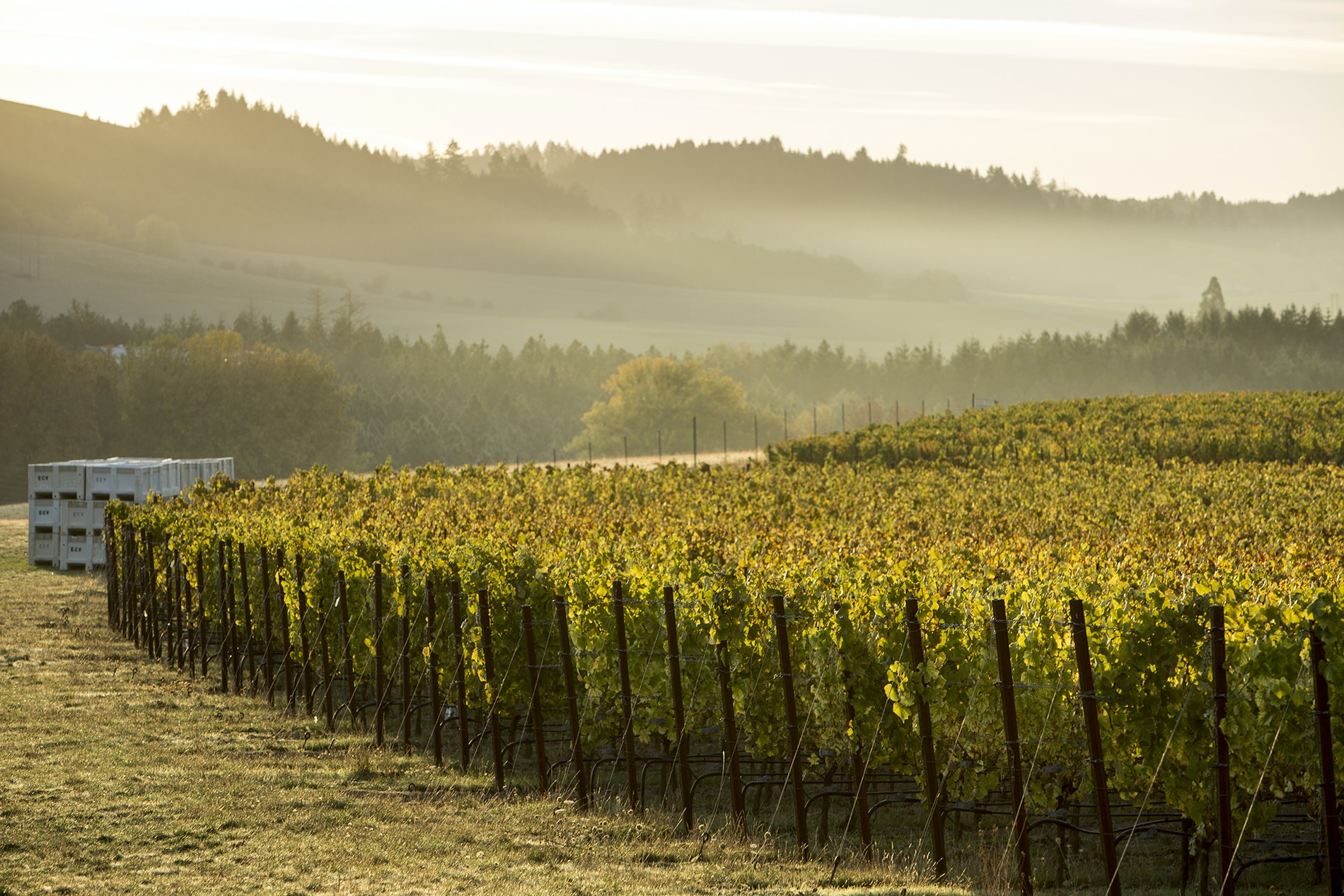 Elk Cove vinifies several different grape varieties, including pinot blanc, pinot gris, riesling, and chardonnay, but its pinot noirs remain the benchmark production.