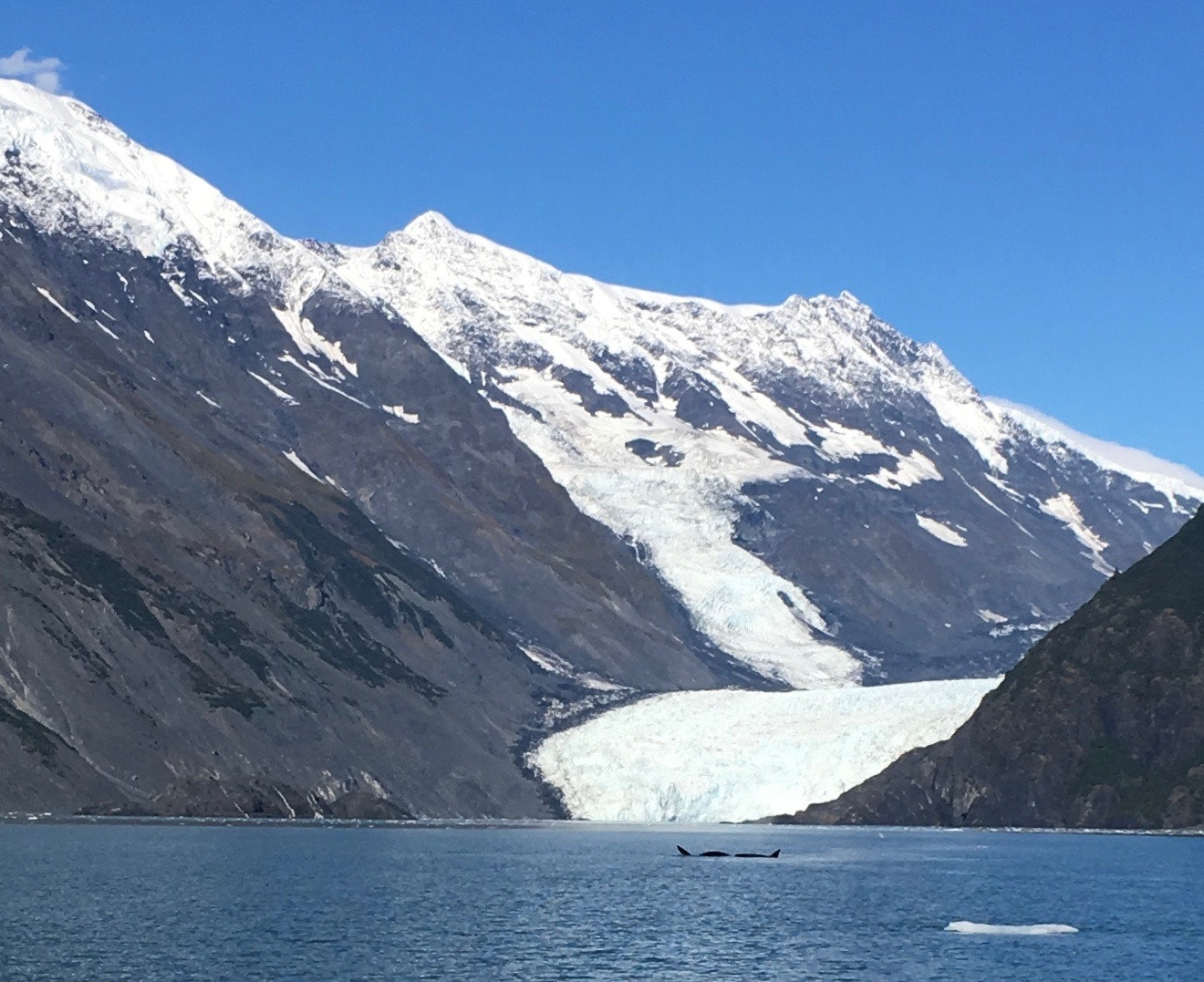 Orcas in front of Barry Glacier