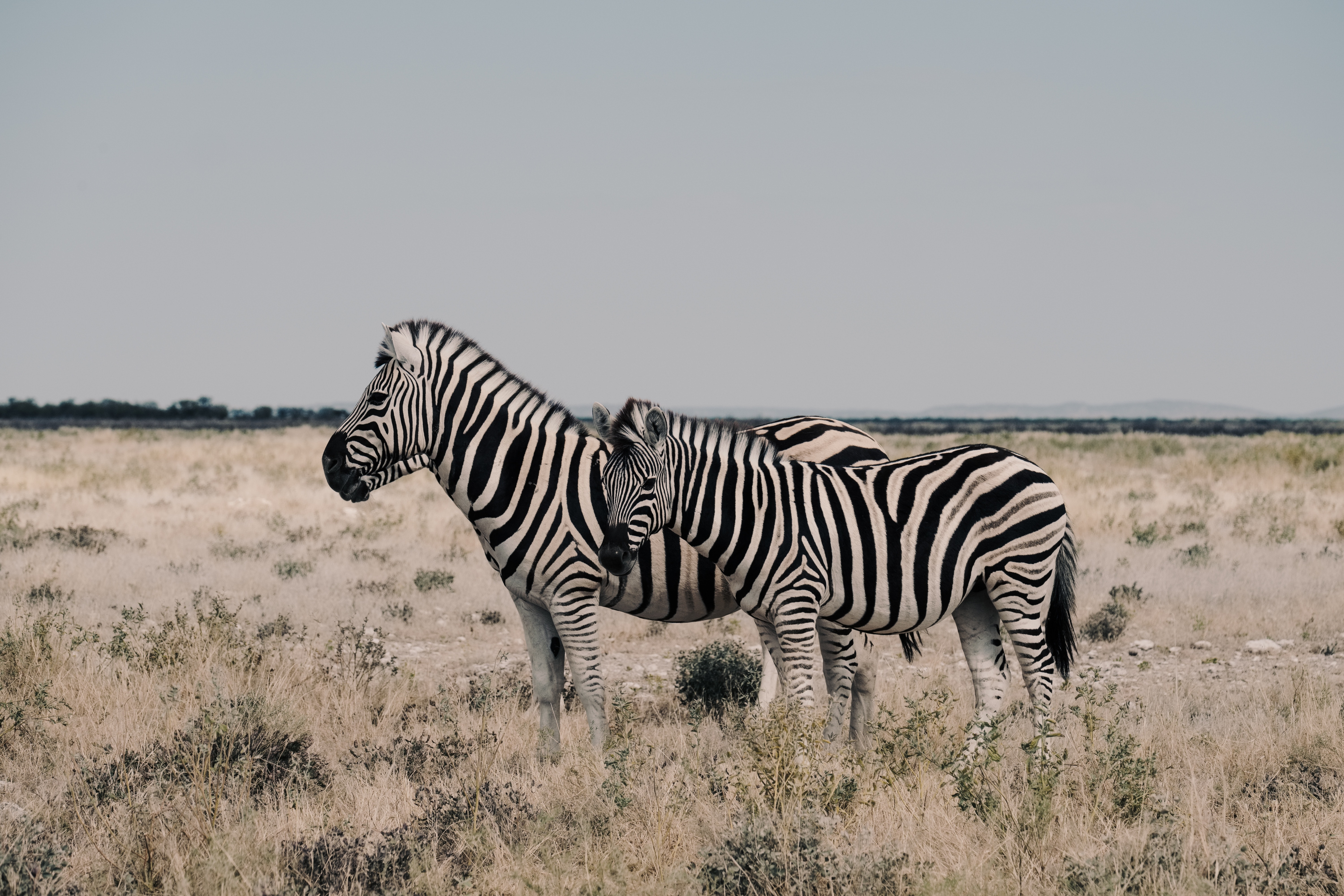 """It was nothing short of spectacular to see the herds of zebra roaming the plains,"" says Cui."