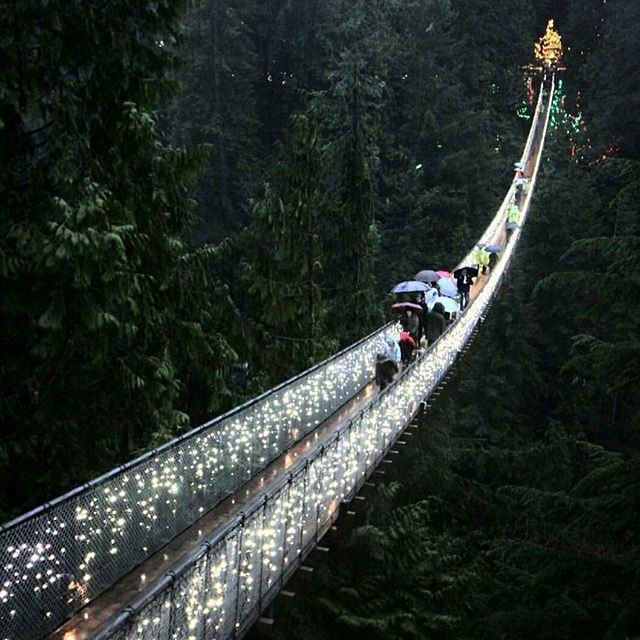 The Capilano Suspension Bridge looks absolutely enchanted.