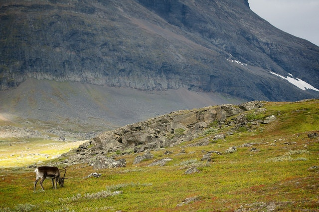 A typical view on the Kungsleden trail.