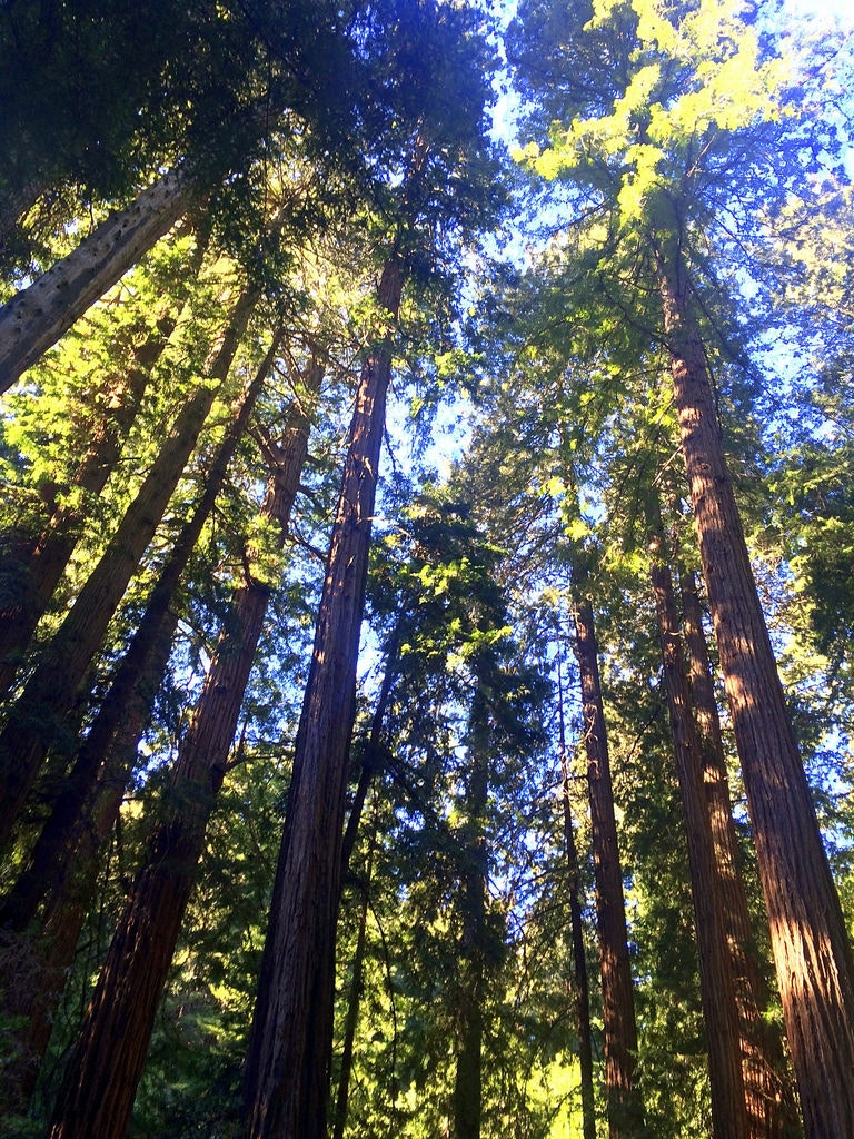 Deep in the Redwood National Park.