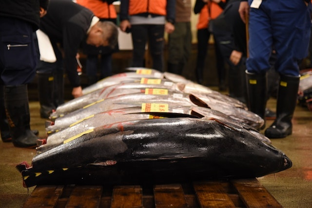 The Tsukiji tuna auction.