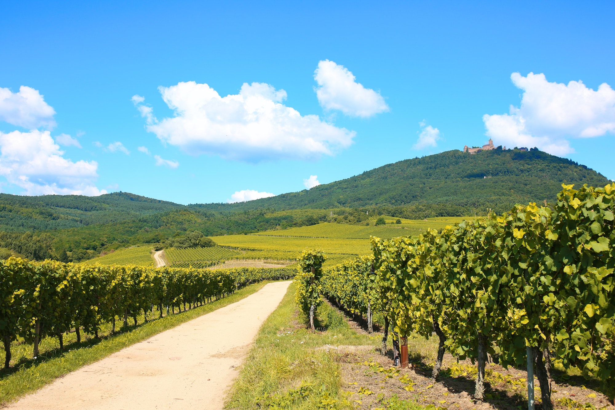 The Alsace Wine Road stretches from Strasbourg to Colmar in eastern France.