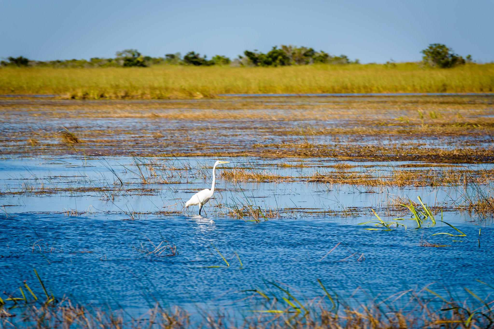 Head to Everglades National Park for bird- and gator-watching.