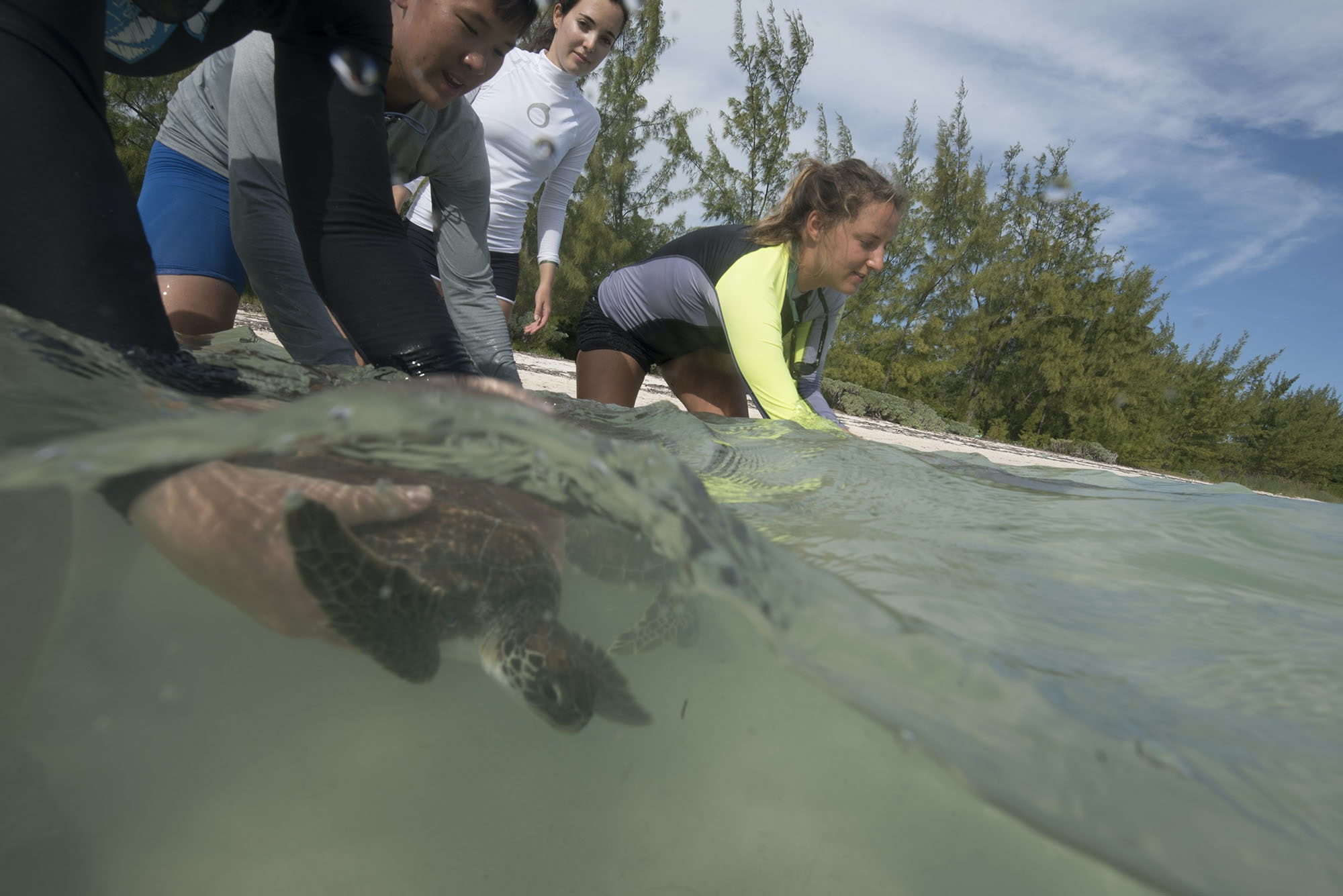 Volunteers release measured sea turtles.