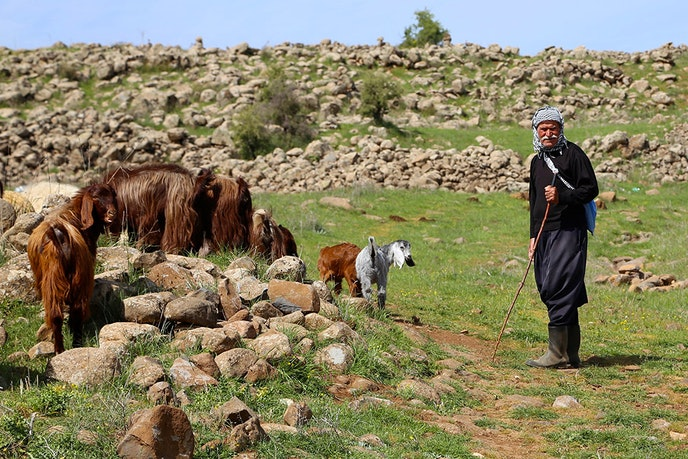 Parts of the LMT have been used by shepherds and farmers for generations; others are footpaths dating back to antiquity.