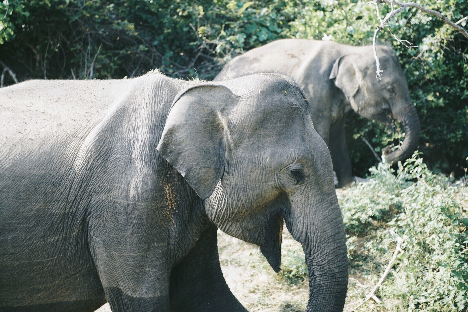 """""""We saw these two elephants, a mother and child, in Yala National Park,"""" Rudd says."""