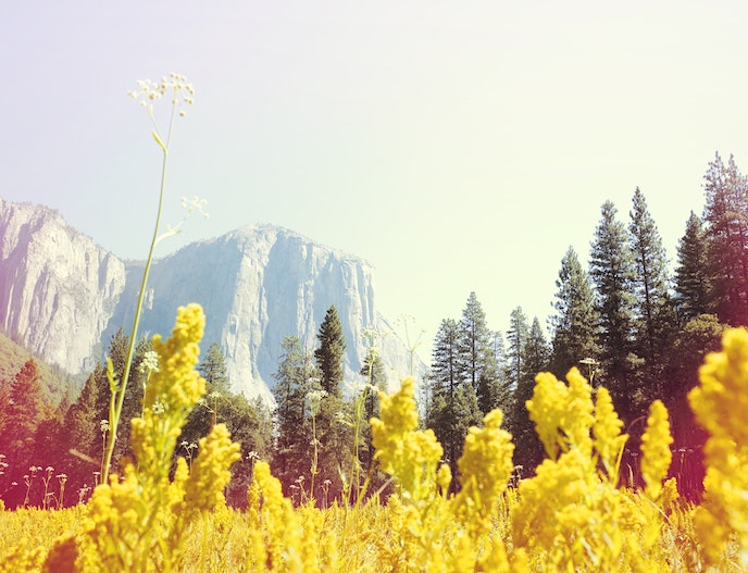 El Capitan Meadows, Yosemite National Park