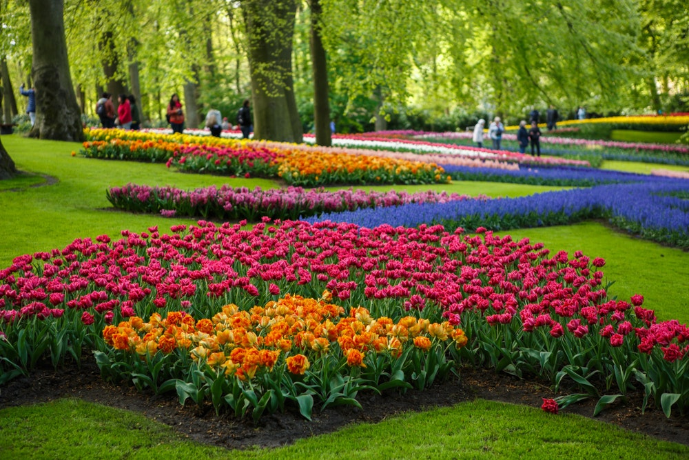 Take a short drive outside of Amsterdam to see millions of tulip bulbs in bloom.