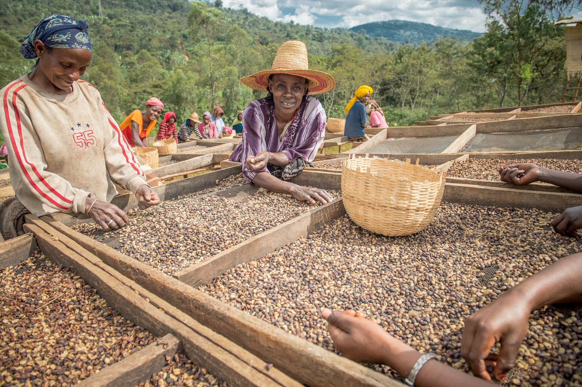 Ethiopia's Kaffa region is home to the largest pool of genetic diversity in the coffee world—more than the rest of the top coffee-producing countries combined.