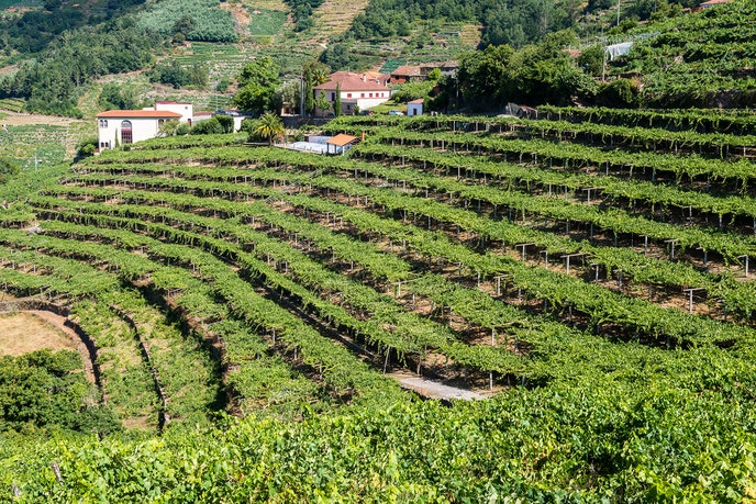More remote Galicia is oft-overlooked in the wine world, but it consists of five D.O.s, including the more recognized Rias Baixas and (as pictured here) notable up-and-comer Ribeira Sacra.