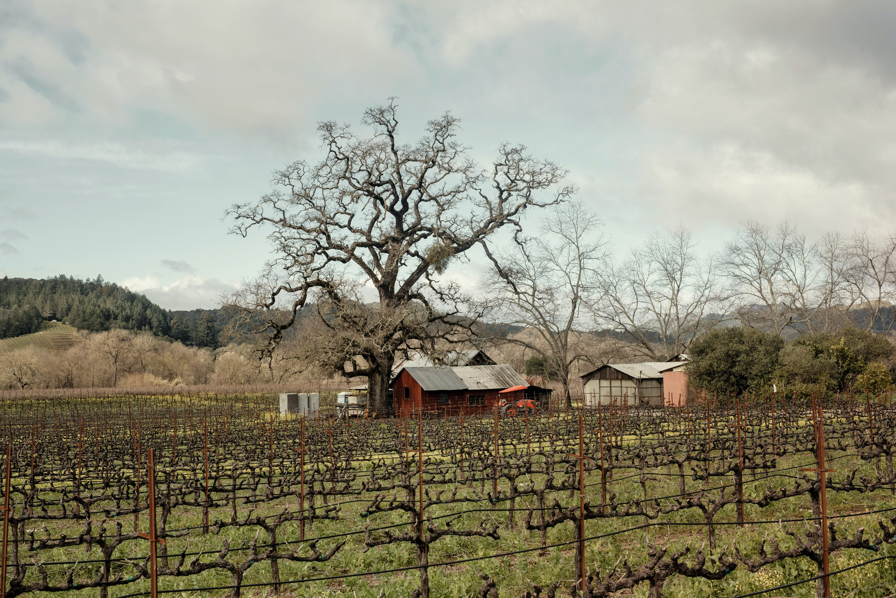Anderson Valley is a quiet, heavily forested wine country between CA-101 and CA-1.