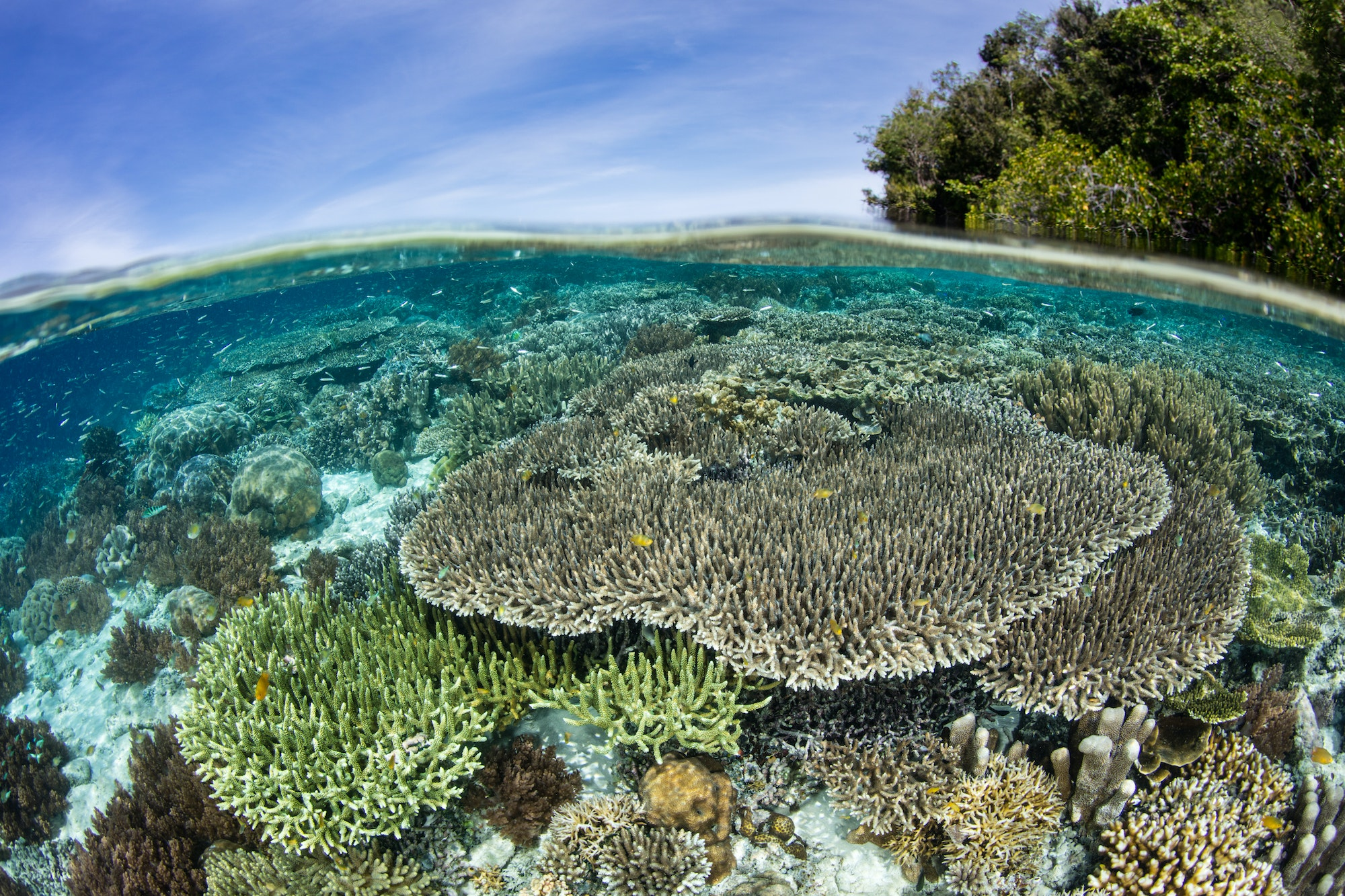Raja Ampat's coral reef systems are home to more than 1,300 fish species.