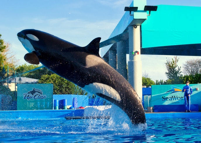 SeaWorld has discontinued its killer whale shows.