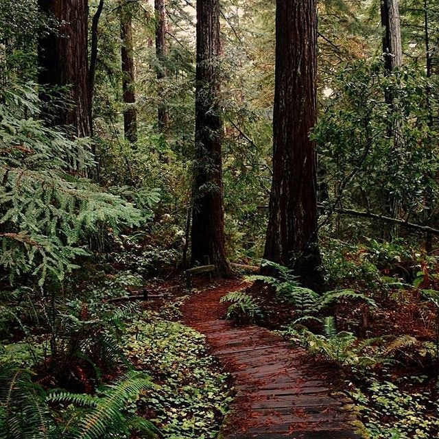 There's something magical about setting foot in the quiet grandeur of a redwood forest.
