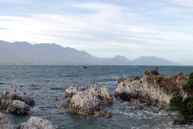 Kaikoura is an ideal place to spot one of NZ's 65 species of seabird