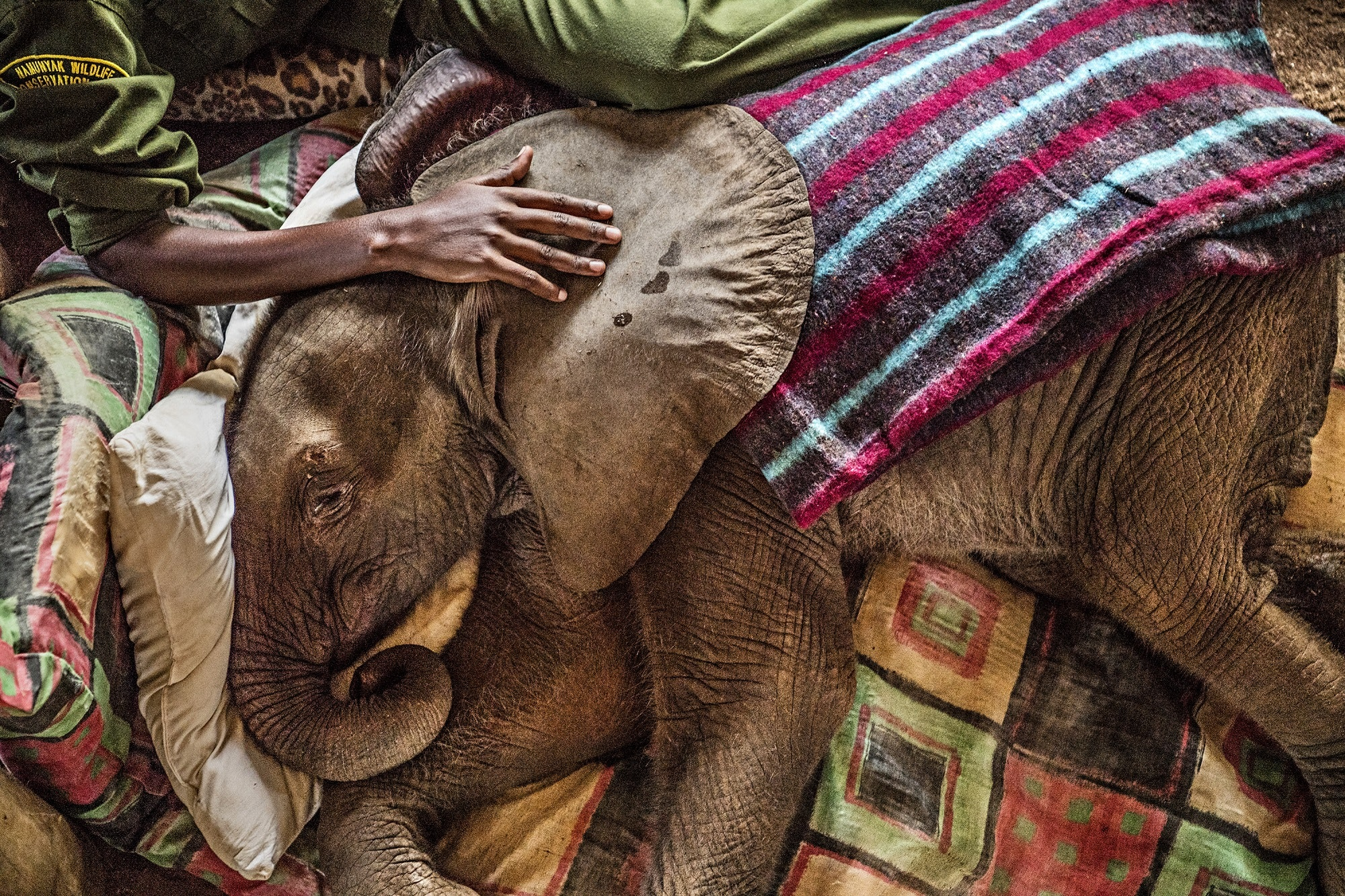 Our honorees include M. Sanjayan, who has dedicated his life to protecting nature and wildlife. Here, Suyian, the first orphaned calf to arrive at the Reteti Elephant Sanctuary in Kenya, is comforted by keeper Mary Lengees.